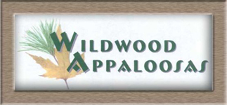 Wildwood Appaloosas