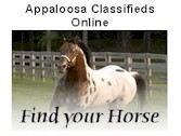 Appaloosa Classifieds Online